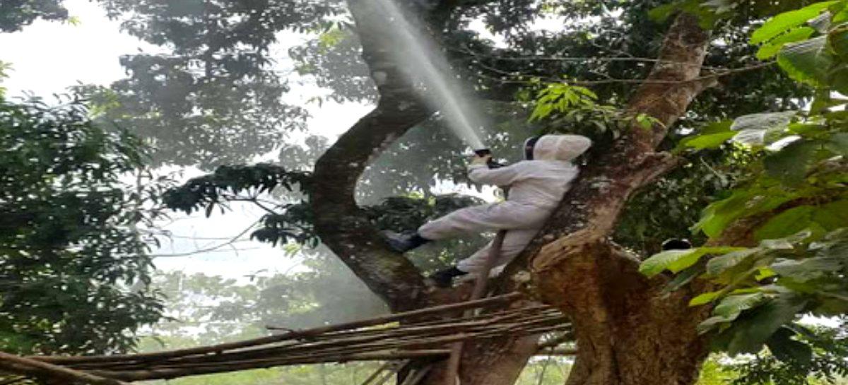 Aumentaron atenciones por abejas africanizadas en Chiriquí